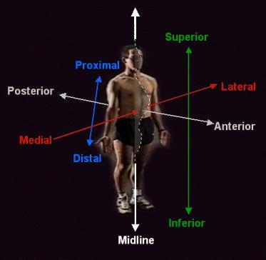 terminologia basica anatomica