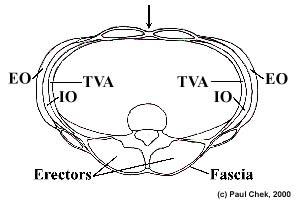 fascia toracolumbar