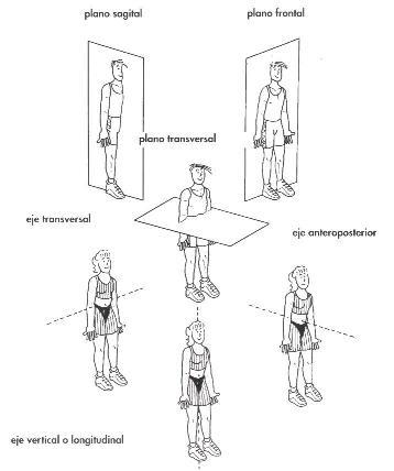 Ejes y planos de movimiento del cuerpo, ~ pilates unidad la serena